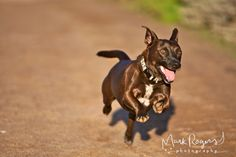 """Pet Photography Tip: """"To capture your pet in motion, position yourself with the animal coming towards you at a slight angle. Keep your shutter speed at least at 1/500 and click like crazy!"""" - - via Mark Rogers Photography"""