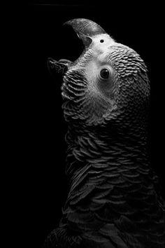 Vogelfotografie is een tak van sport die veel geduld, doorzettings-vermogen en oefening vraagt. Gelukkig kan het resultaat ook erg mooi zijn.