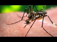 27 mil casos de dengue são registrado em Minas Gerais neste ano