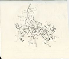 drawings of honeysuckle - Google Search