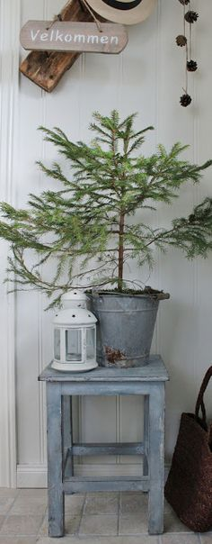 simple rustic chic Christmas. tree. lantern. weathered stool / bench.