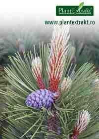 Jneapan Plants, Plant, Planets
