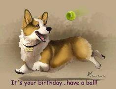 It's Your Birthday Corgi Funny, Cute Corgi, Corgi Dog, Pet Puppy, Baby Corgi, Happy Birthday Dog Meme, Puppy Meme, Corgi Drawing, Animal Graphic