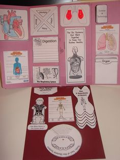 More Lapbook Human Body Ideas!
