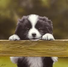 BORDER COLLIE PUPPY. This is one of the dogs we may get when we lose one of ours someday