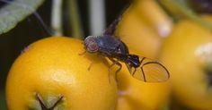 ¿Por qué hay muchos mosquitos en mi casa?. Mosquitos es un nombre común para los insectos muy pequeños que vuelan y que son parte de la familia de mosca. Hay muchas especies de mosquito, pero sólo unos pocos de ellos se encuentran alrededor de la casa. Varias especies son atraídas a diferentes ambientes, por lo que es importante identificar las especies antes de tratar de erradicar los ...