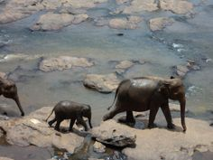 From the archives -  Elephant Orphanage - Sri Lanka