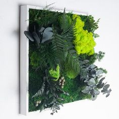 http://www.materiel-mur-vegetal.fr/811-1429-thickbox/cadre-vegetal-stabilise-jakala-40x40cm.jpg