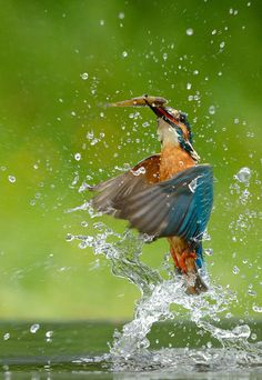 Kingfisher catched the fish by by Benjamin Joseph Andrew