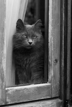 "Cat at the Window""..."