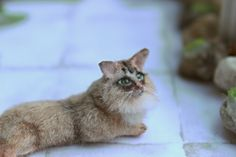 Patricia Cabrera, WoolyTales - Somali cat wit poseable head, made from polymer clay and hand furred