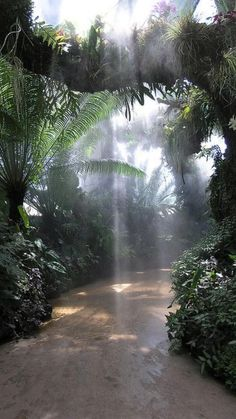 Images Jungle, Bristol Garden, Bristol Uk, Beautiful World, Beautiful Places, Tropical Paradise, Tropical Forest, Tropical Gardens, Tropical Beaches