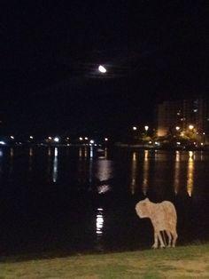 A lua iluminando a noite!