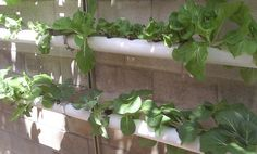 Inexpensive and awesome hydroponic ideas!