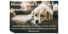 Discover How Lost Pets Are Reunited. www.buywooftag.com Lost Pets, Losing A Pet, Dogs, Animals, Animaux, Doggies, Animal, Animales, Pet Dogs