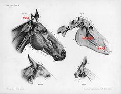 Horse Bits & Pieces - Part I: The Snaffle Bit