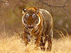 Sariska National Park & Tiger Reserve
