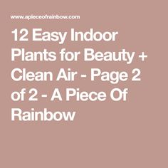 12 Easy Indoor Plants for Beauty + Clean Air - Page 2 of 2 - A Piece Of Rainbow