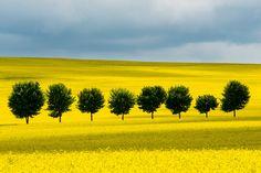 Lindens anywhere in Saxony, Deutschland. 500px / Photo Eight by Thomas Uhlig