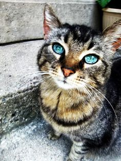 My brother's cat. Her eyes are amazing.
