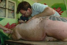 Wim Delvoye has been tattooing pigs since the 1990s. In the early 21st century a tattooed pigs project was set up in the Art Farm in China, where there are fewer strictures regarding animal welfare than in most parts of the Western world. This truly is sickening and upsets me beyond words.