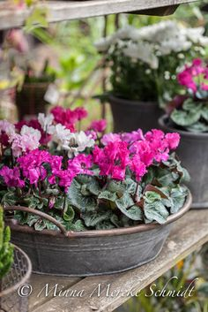 Advice on everything gardening House Plant Care, House Plants, Container Plants, Container Gardening, Garden Planters, Planter Pots, Beautiful Gardens, Beautiful Flowers, Deco Floral