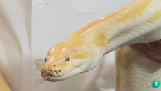Serpientes. Mitos y Leyendas Snake, Snakes, Animales, Adventure, A Snake