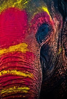 Holi Festival, festival of colors in the Hindu religion. This elephant is covered in colors from the festival. How cute!!