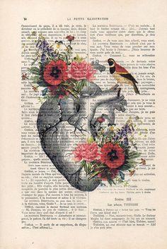 Coeur de fleur avec un oiseau Impression d'anatomie sur page antique des années 1900. Le véritable papier antique que jutilise provient de page de livre français antique originale des années 1900. La page est denviron 7,5 x 11,4(19 x 29 cm). Chaque création est unique, vous recevrez limage similaire mais sur une page différente du papier ancien y compris les signes de la beauté à travers le temps (taches, pliures coin, impressions inégales, etc.). Votre tirage sera emballé dans une pochet...