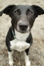 These are 7 of the greatest life lessons on health and living that dogs have to offer. What Dogs, All Dogs, Pocket Pitbull, Mans Best Friend, Best Friends, Border Collie Mix, Open My Eyes, Great Life, Health Articles
