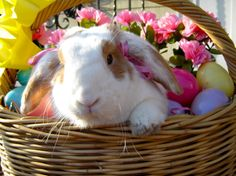 Bunny in an Easter basket in the sunshine - March 31, 2013