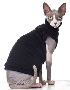 469px-Sphynx_cat_wearing_clothes.jpg