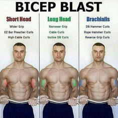 """The bicep has two heads (hence the prefix """"bi""""). The two heads are the long head and the short head. However, there is an additional muscle, the brachialis, which technically is not part of the bicep but contributes to the overall development of your bice Fitness Workouts, Weight Training Workouts, Gym Workout Tips, Biceps Workout, Fitness Tips, Fitness Motivation, Health Fitness, Lifting Motivation, Bicep Dumbbell Exercises"""