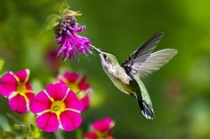 Hummingbird Photograph - Hummingbird With Flower by Christina Rollo