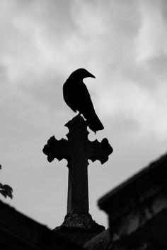 Raven and Cross 2 by Heurchon: http://heurchon.deviantart.com/art/Raven-and-Cross-2-87382109
