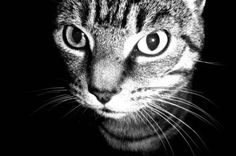cat image by tnk333 from Fotolia.com
