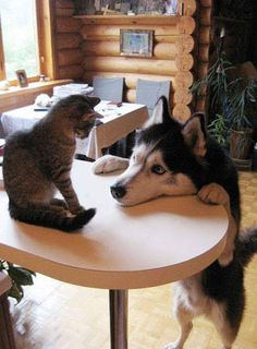 Awww........so cute...... Doggie is like.... Do you want to play?