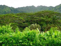 #hawaii #travelling