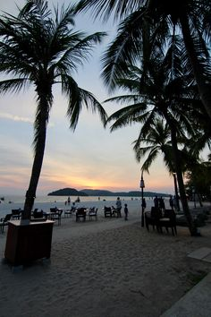 Sunset beach palm trees asia malaysia thailand travel blog