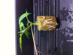 107 Best Hydro Growing Images In 2013 Aquaponics