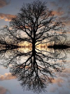 LIVINGSPARK: Inverted Tree of Reality