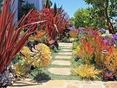 Drought friendly landscape   California Friendly® Garden Solutions