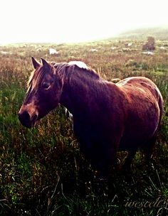 Friendly pony today in The #Burren, near #Fanore, #Clare,#IRELAND #horse