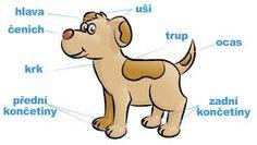 Výsledek obrázku pro dělení živočichů podle stavby těla obrázky Scooby Doo, Fictional Characters, Fantasy Characters