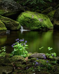 Serene Green by Bill Wakeley #water #violets
