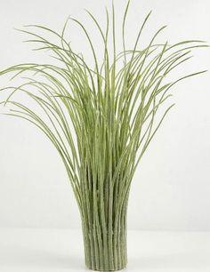 Tall preserved grass 40 bright green basil natural for Tall grass decor