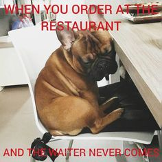 """""""When you order at the Restauraunt and the Waiter never comes"""", funny French Bulldog"""