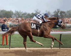 secretariat horse | Secretariat gallops into the record books in the 1973 Kentucky Derby ...