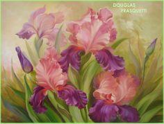 Douglas Frasquetti - Iris