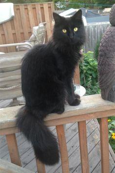 Lost Cat - Unknown - Milton, ON, Canada L9T 2A7